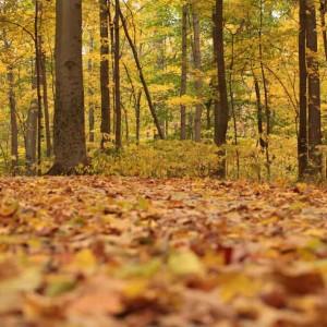 11月の壁面装飾は、落ち葉、山の中、秋の行事を意識して作ろう!